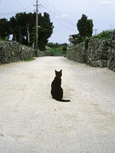 竹富島の黒ネコ