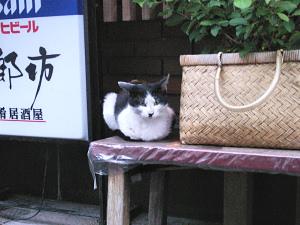店番をする? ネコ