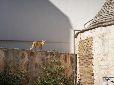 トゥルッリとネコ
