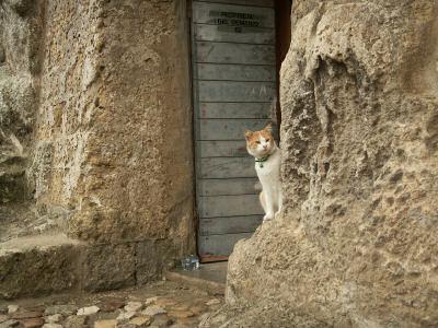 マテーラのりりしい飼い猫(本文とは直接関係はありません)