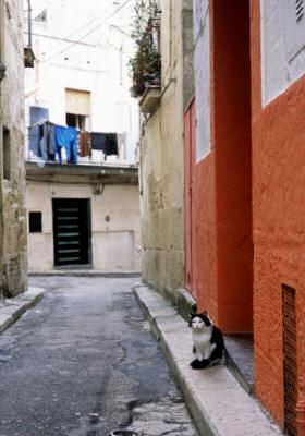 旧市街で見かけた不思議なネコ