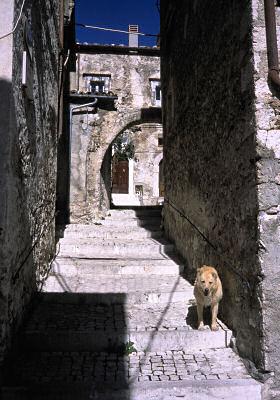 山の上の町に住む犬