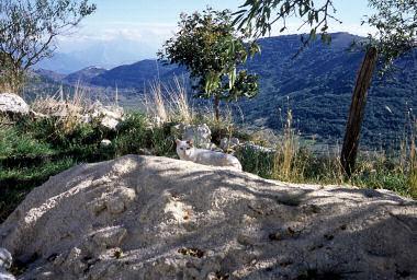 海抜1000メートルを越えるサント・ステーファノで暮らすネコ