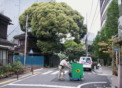 富士見の緑
