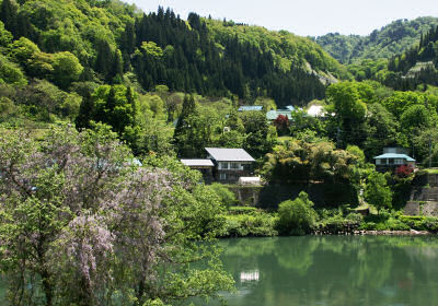 水沼集落と藤の花