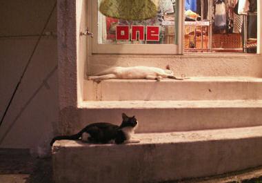 那覇の裏町のネコ