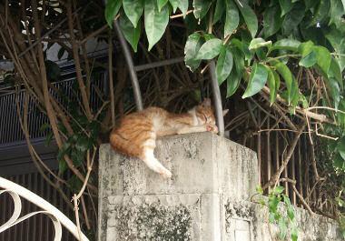 那覇のネコ