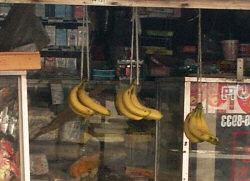 吊るされたバナナ