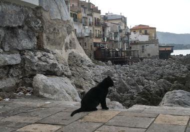 チェファルーの黒猫