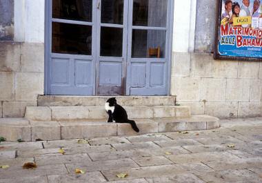 モーディカのネコ