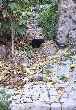 シークリのネコ