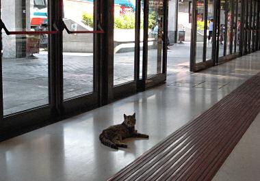 トリエステ駅のネコ