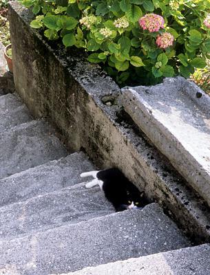 ポッファブロのネコ