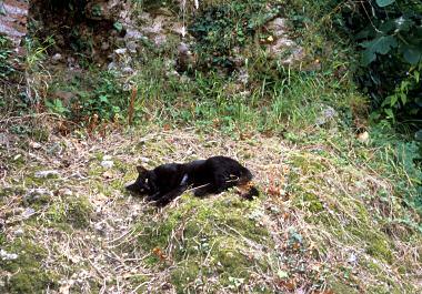 アーゾロのネコ