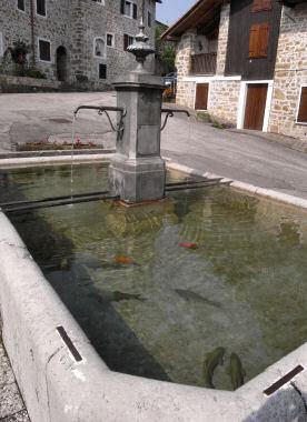金魚のいる池