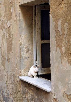 サッサリのネコ