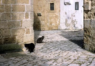 オートラントのネコ