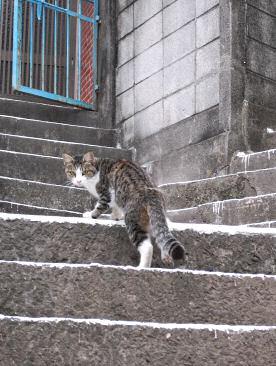 坂道のネコ1
