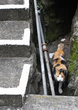 坂道のネコ2