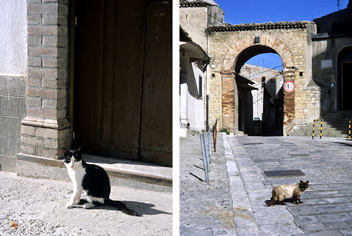 トリカーリコのネコ