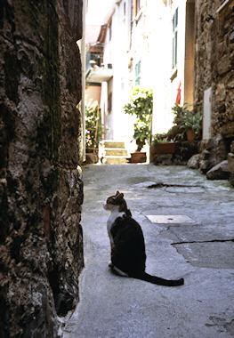 コルニーリャのネコ1