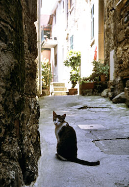 コルニーリャのネコ2