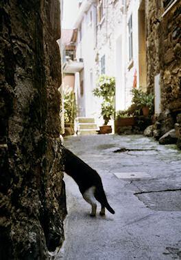 コルニーリャのネコ3