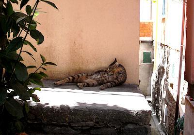 チンクエテッレのネコ2-1