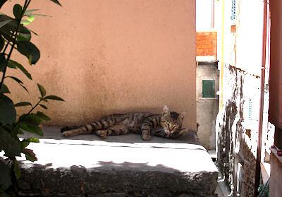 チンクエテッレのネコ2-2