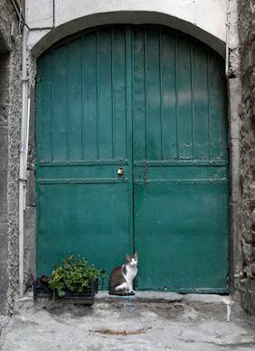 チンクエテッレのネコ1