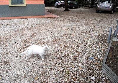 リーミニのネコ1