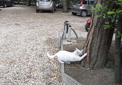 リーミニのネコ2