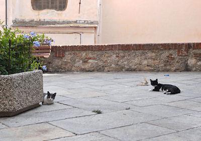 インペーリアのネコ