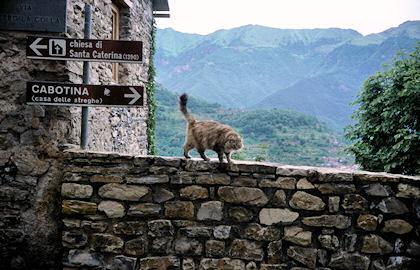 トリオーラの豪奢なネコ