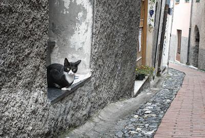 トリオーラの理知的ネコ