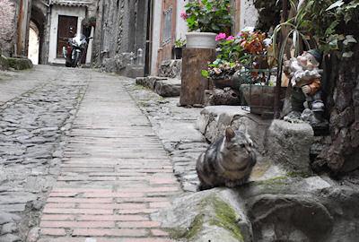 イーゾラボーナのネコ