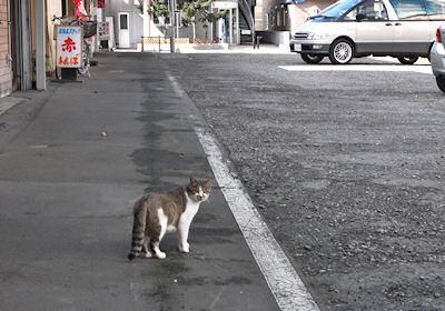 名寄のネコ