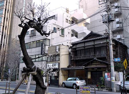 富士見の梅