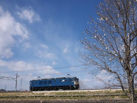 武蔵野線EF64 1000番台