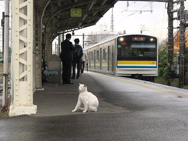 扇町駅のネコ駅員3