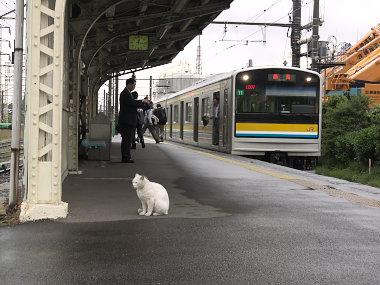 扇町駅のネコ駅員4