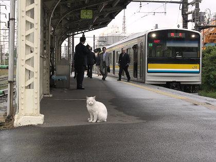 扇町駅のネコ駅員5