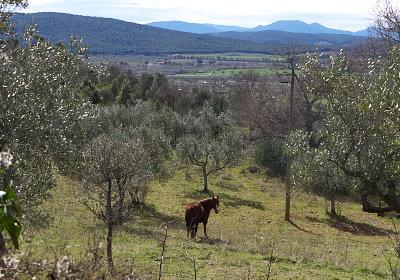 マッサ・マリッティマ近くの馬