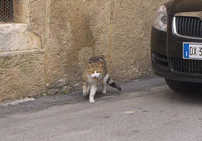 マッサ・マリッティマのネコ