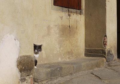 アンギアーリのネコ