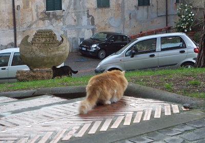 タルクイニアのネコ