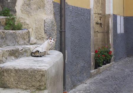 ペットラーノのネコ