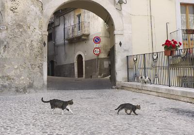 城門とネコ