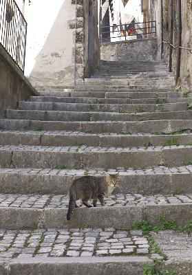 スカンノのネコ