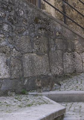 スカンノの保護色ネコ